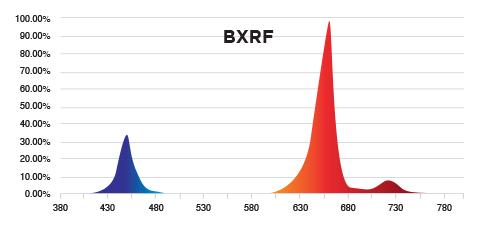 PhotonMax Spotlight - BXRF Spectrum